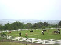 5)くろべ牧場①.jpg