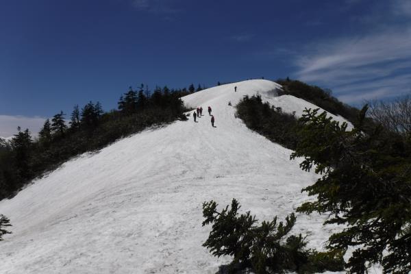 170611saku僧ヶ岳線パトロール150.JPG