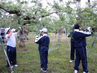 Fruit picking work