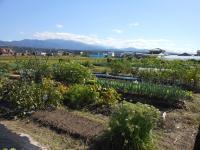 市民農園①.JPG