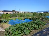 市民農園②.JPG