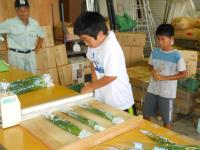 Bagging of Chinese chive②