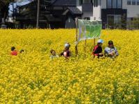 Field mustard Festival
