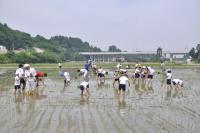 Rice-transplanting scenery
