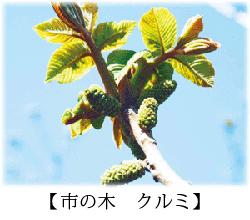 Tree of city walnut