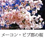 メーコン・ビブ郡の桜