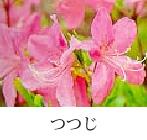 City flower azalea